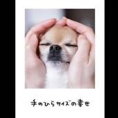 PW_v0029_fujiphoto_131011