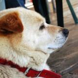 愛犬がもし要介護になったら…プロの「老犬介護サービス」に学ぶ
