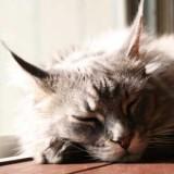 愛猫の免疫力に黄信号!7歳はケアを始める節目の年齢。