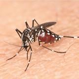 """愛犬の「蚊」対策、どうしてますか?""""敵""""を知りつくして、ガードを固めよう"""