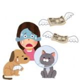 [PR]飼い主さんを悩ます「二大お困り事」って?高額化するペット医療費について考えてみました。