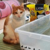 [PR]猫専門医・服部幸先生に学ぶ、理想の猫トイレとは?!