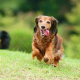 [PR]今さら聞けない愛犬の「フィラリア予防」のモヤモヤを解決!飼い主さんの大半が知らなかった事実って何?