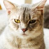 [PR] 猫専門医・服部幸先生に教わる、腎臓病にかかるリスクを減らす6つのポイント【愛猫を慢性腎臓病から守るために】