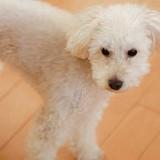 [PR]犬の健康寿命に差をつける関節ケア。1歳過ぎたら気をつけて!リハビリ専門獣医師に聞きました