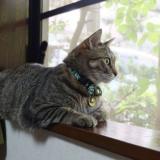 [PR]家猫。なのに、寄生虫。秋も油断できない感染リスクと対策法とは?獣医師がアドバイス。【マダニ、ノミ、フィラリア予防】
